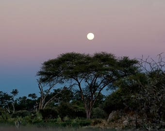 African Moon Rise