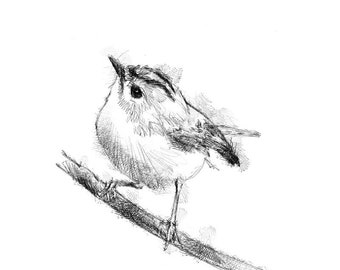 Goldcrest sketch | Limited edition fine art print from original drawing. Free shipping.