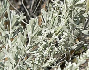 Fragrant Sagebrush Bundle (Dried)