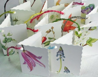 Botanical Gift Tags-flower place card-gift tags for weddings-flower illustration-clematis print-Ornamental cabbage label-gift wrapping label