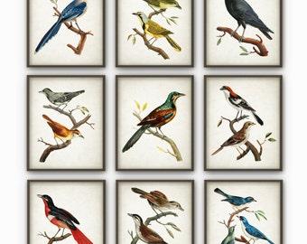 Bird Art Print Set of 9 - Vintage Bird Decor - Antique Bird Book Plate Illustration - Bird Poster - Bird Print - Bird Decor - AB211