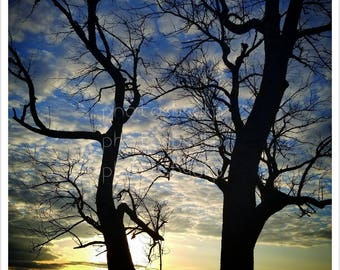 8x10 Country Sunset through a pair of trees photo print