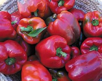 VPPS) WISCONSIN LAKES Pepper~Seeds!!~~~~~Great Early Variety!