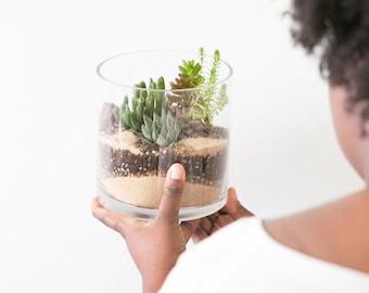 The  'Colorful ' Jade Terrarium - Featuring 5 Succulents, Succulent Terrarium, Home and Living, Gift, Plant, Living Home Decor, Glass