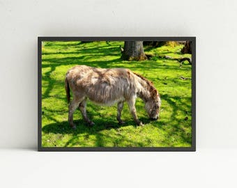 Shaggy Miniature Donkey Wall Art - Animal Printable Wall Art - Digital Art Download - Nursery Wall Art - DIY Home Decor - Instant Download