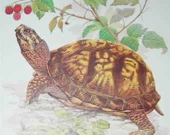 Turtle Print Severt Andrewson 11471 Scriptural Scripture Tortoise