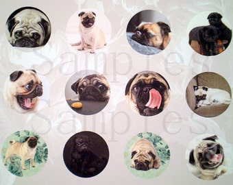 "1"" Inch Pug Flatback Buttons, Pins or Magnets 12 Ct. CS1"