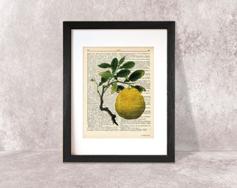 Lemon print-kitchen wall art-lemon on book page-lemon dictionary print-lemon poster-wedding gift-home decor-lemon decor-NATURA PICTA-npdp063