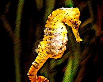 Waterslide decal - sea horse