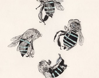 Blue Banded Bee Formation