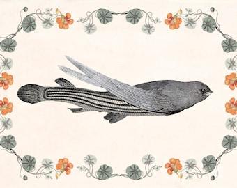 "Fantasy Wall Art, Surreal collage print, Hybrid Animal Art, fantasy art, Fish Bird Art, Dreamy Art print, Morph Art ""The Morphauna"""