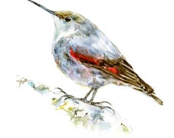 Bird watercolor painting - bird watercolor painting - 5x7 inch print - 0109