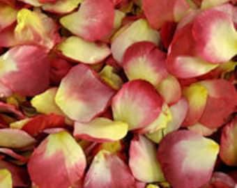 NEW! 100 cups. Sunny Love Preserved Freeze Dried Red & Bright Yellow Rose Petals. Rose Petals. Wedding Petals.Flower Girl Petals. Petals USA