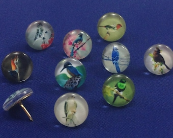 Decorative Push Pins, Decorative Bird Push Pins, Drawing Pins, Push Pins, Thumbtacks, Cork Board Pins, Birds Drawing Pins, Teachers Gift