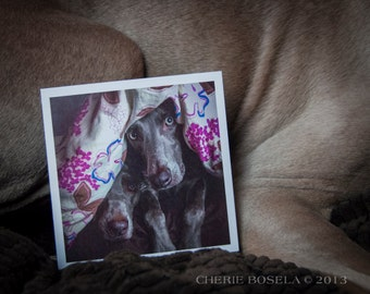 Blank Weim Greeting Card - Under the Covers by Cherie Bosela
