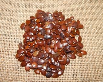 monval seeds vegetable beads