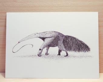 Card // Anteater postcard // handmade pendrawing // animal illustration // blanco card // linedrawing