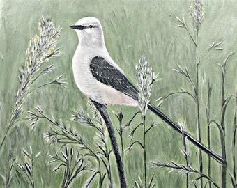 "Scissor-tailed Flycatcher print (5"" x 7"")--Original Wildlife Artwork (Faded)"