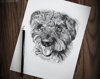 8X10 Pet Sketch Drawing - Schnoodle - Schnauzer Poodle Mix