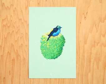 """Tanager, 6"""" X 4"""" / A3-03"""