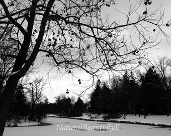 Nature photography, pond in winter, trees, snow, bare branches, landscape photography, nature, wall art, fine art, print