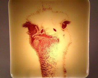 Ostrich Fused Glass Night Light