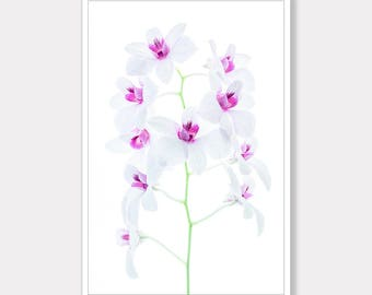 Orchid, Orchid Flower Photo, Printable Photo, Botanical Photo, Modern Photo Art, Instant Digital Download, Photo Download, Instant Download
