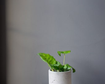 Cement Plant Pot - Small
