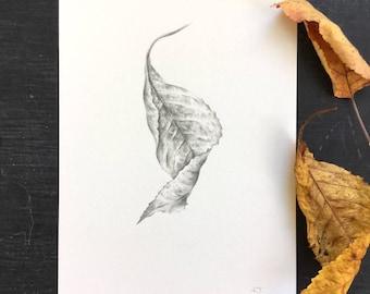 Twist, cherry tree leaf - original drawing
