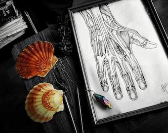 The Anatomy of The Hand Art