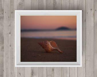 Beach Shell Beach Photography Beach Shell Photo Landscape Photography Beach Photo Digital Image Downloadable Print Wall Art Photography Art