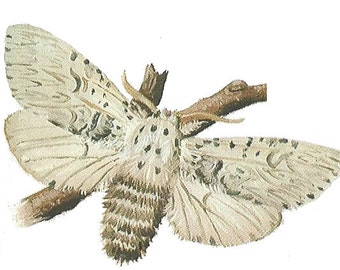 Temporary Tattoo Moth Vintage Book Illustration