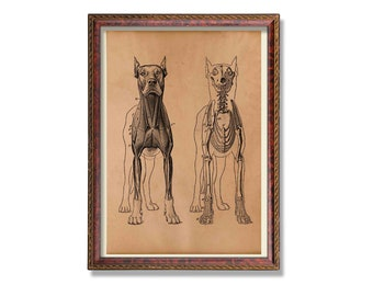 Antique dog skeleton print Animal anatomy poster Medical wall decor