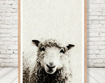 Nandi Animals, Sheep, Wall Art, Photography, Digital Print, Wall Decor, Pets, Kids Nursery, Poster, Farm Animals, Black and White, baa-baa