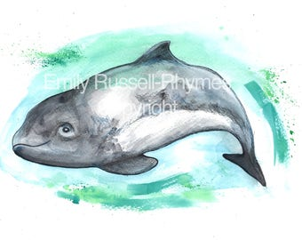 PORPOISE illustration print.  A4 limited Edition Print.  Signed and Numbered.