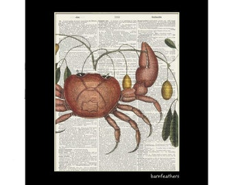 Vintage Crab Illustration - Dictionary Art Print - Book Page Art Print - Home Decor No. P434
