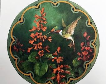 Anna's Hummingbird with Salvia 12 x 12 lithograph