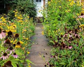 Amana Colonies - Flowers - Flower Gardens - Iowa - German - Historic Village - Fine Art Photography
