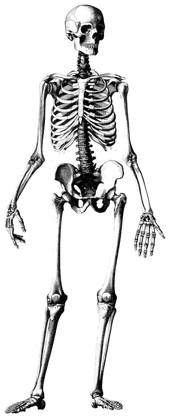 Menschliche Anatomie alte medizinische Atlas Abbildung