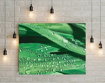 Nature Photography, Green Decor, Water Droplets, Spa Decor, Bathroom Art Print, Calla Lilly, Macro Photography, Garden Theme, Nature Decor
