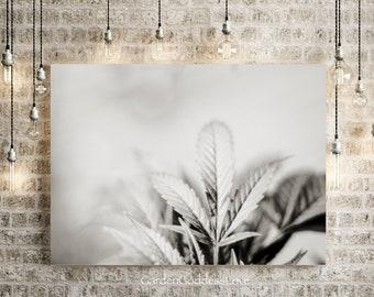 Dreamy Leaf BW1, Fine Art Cannabis Photography Art Print, Instant Digital Download, Printable Cannabis Art, Black White Cannabis Beautiful