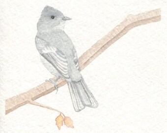 Eastern Phoebe Card