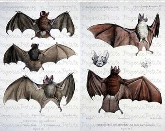 Vintage Bat Digital Download Collage Sheet D
