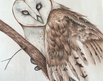 Mystical barn owl