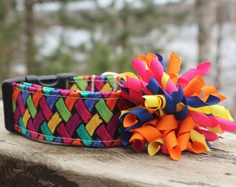 Rainbow Dog Collar, Pink Dog Collar, Blue Dog Collar, Chevron Dog Collar, Fall Dog Collar,  Summer Dog Collar, Dog Collar with Bow