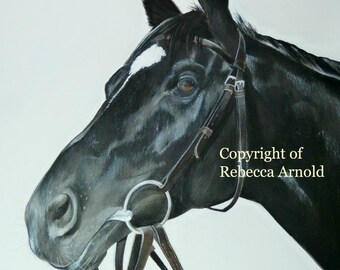 Racehorse Limited Edition Giclee Print of Dandino (Head Study 1) Horse Racing Print