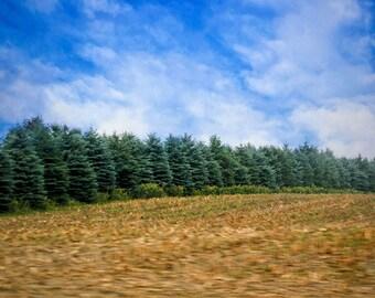 Christmas Tree Farm, Winter Print, Snow Photo, Winter Photo, Snow Photography, Winter Landscape, Winter Snow, Winter Picture, Christmas Tree