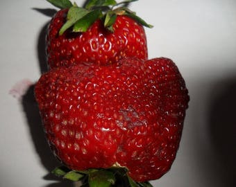 Giant Strawberry real ,true,own pictures 25 fresh seeds
