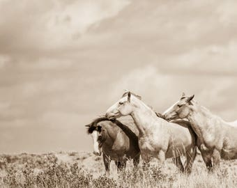 """Horse print,Wild Horse Photo , Horse Photography. Title: """"Loved"""""""