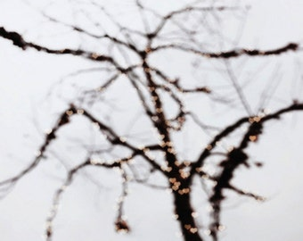 hearts, love, tree, nature, bokeh, blur, fine art photography
